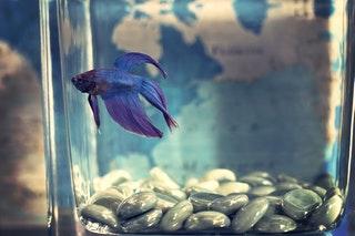 Az akvarisztika bemutatása